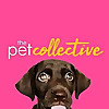 The Pet Collective | Funny Pets Videos