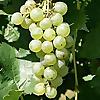 Virginia Wine Time