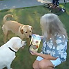 Home Van Pet Care Project