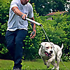 Best Buddy Dog Trainer, LLC