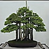 Bonsai Iterate