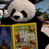 Mrs. Yollis' Classroom Blog