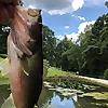 NCangler | NC Fishing Blog