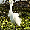 FL: Dina's City Wildlife Adventures