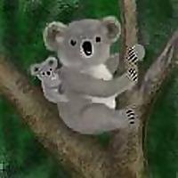 A Koala's Playground