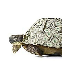 The Turtle Investor