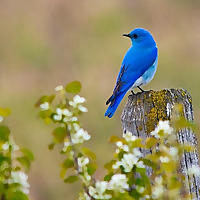 Birds Calgary