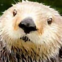 Otters And Science News