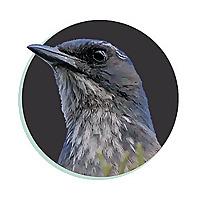 Treebird Branding Blog