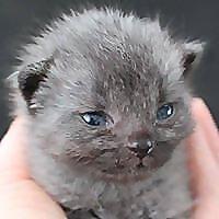 Bruce the cat - Blog