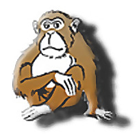 Survival Monkey Forums