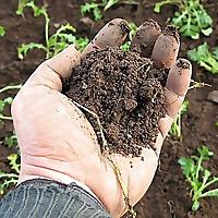 Tiny Farm Blog
