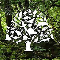 Forest & Bird | Youtube