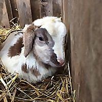 Wellspring Forest Farm & School Blog