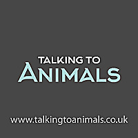 Talking to Animals | The Animal Communication & Reiki Pet Healing Blog