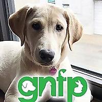 Good News For Pets | Pet News Blog