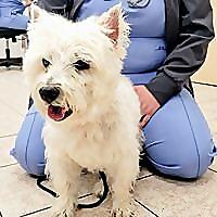 Lawndale Veterinary Hospital Blog
