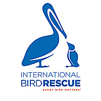 International Bird Rescue Every Bird Matters