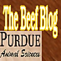 The Beef Blog