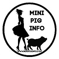 Mini Pig Info   Dear Pig Whisperers Blog