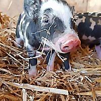 The Atherton Farm Blog