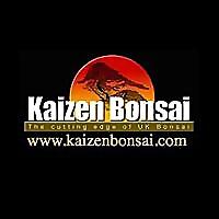 Kaizen Bonsai | The cutting edge of UK Bonsai