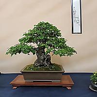 Nik Art bonsai blog