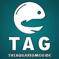 The Aquarium Guide   Aquascaping Tips, Planted Tank Resources & Aquarium Equipment Reviews