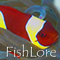 Fish Lore Aquarium Fish Forum