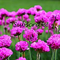Ivy's Flower Garden   Youtube