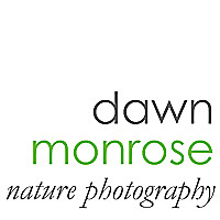 Dawn Monrose Nature Photography