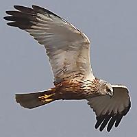 Steve Ashton Wildlife Photography