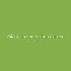 Wildlife in a Suburban Garden