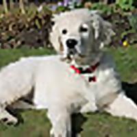The Amateur Dog Owner