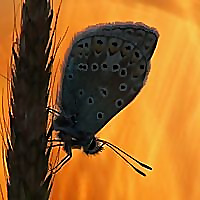 Silvia Reiche   Butterfly & Nature Photography Blog
