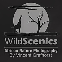 Wildscenics   African Nature Photography