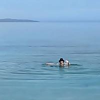 The Wee White Dug