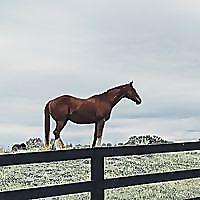 An Equestrian Life