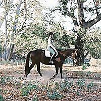 Saddle Seeks Horse | Equestrian Lifestyle Blog