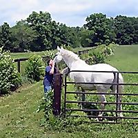 Grey Horse Matters