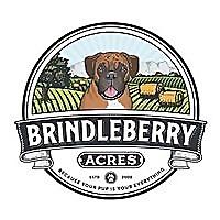 BrindleBerry Pet Photography | Blog