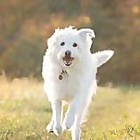 Hairy Dog Photography Blog