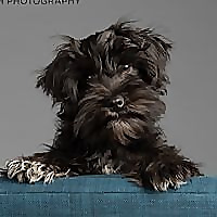 Minneapolis Saint Paul Minnesota Dog & Pet Photographer
