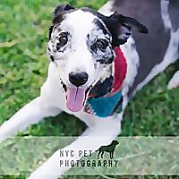 NYC Pet Photography