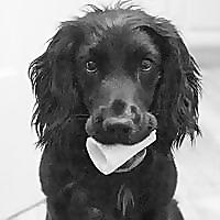 Dog Biscuit Photos
