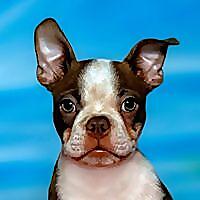 Celebrity Pet Photographer Richie Schwartz