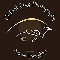 Oxford Dog Photography Blog