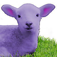 Purple Lamb Fiber Arts | Spinning