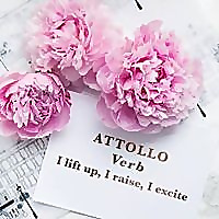 Attollo Lingerie