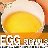 Egg Signals News